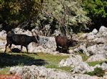 Schitterend landschap - Kefalonia - Foto 49