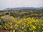 Bij Lixouri op het schiereiland Paliki - Kefalonia - Foto 535 - Foto van De Griekse Gids